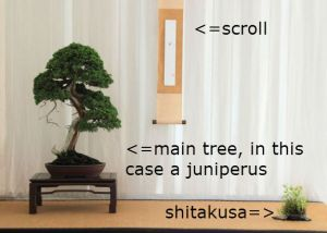 A couple of elements in the Tokonome: the main tree, the scroll and the shitakusa