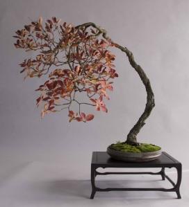 smoke tree with fall colors